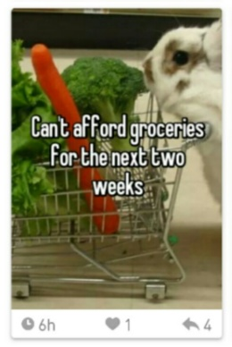 Can't afford groceries